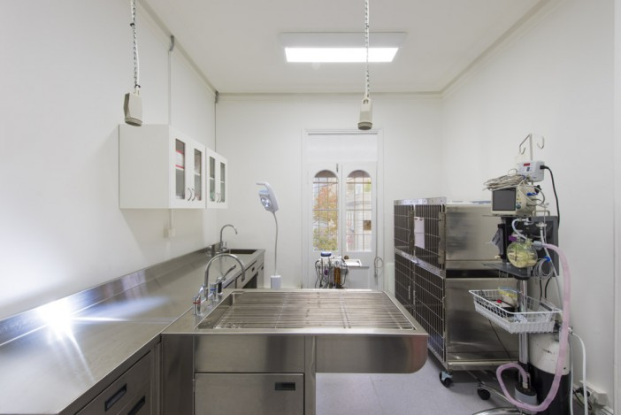 design veterinary interior design vet clinics and hospital