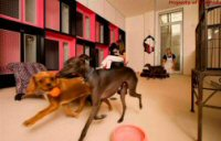 Luxury Dog Hotel, Spa & Salon